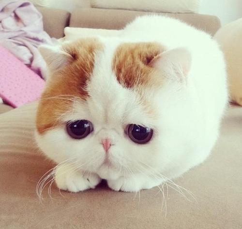 gattino_anti_fusaro